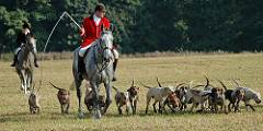 Hunt master in red jacket on horse with line of hounds