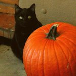 Black cat sitting behind large pumpkin